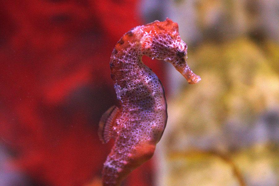 Seahorse World – Tourism Australia and Graham Freeman