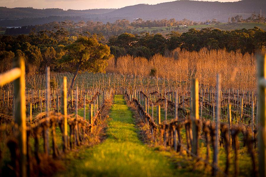 Wines for Joanie – Rob Burnett